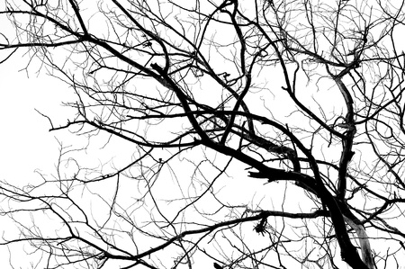 tree branches isolated on white background photo