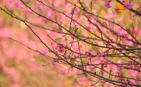 Bonito color rosa Sakura fondo photo