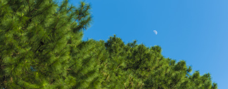 waxing  waning crescent moon phase with silhouette forest pine trees and midnight blue sky cresent