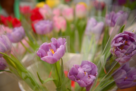 beauty shop: Beauty colorful tulip in pot of flower shop, Selective focus