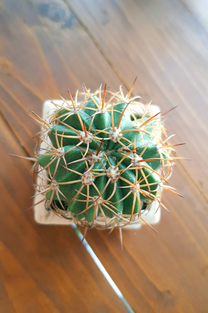 Vintage style cactus in pot