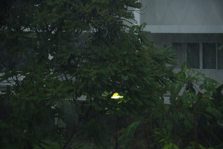 Heavy rain with gree tree background