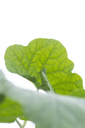 Green leaf texture with white background