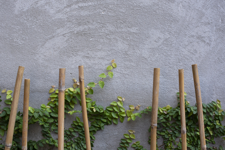 Vintage style bamboo with concrete wall