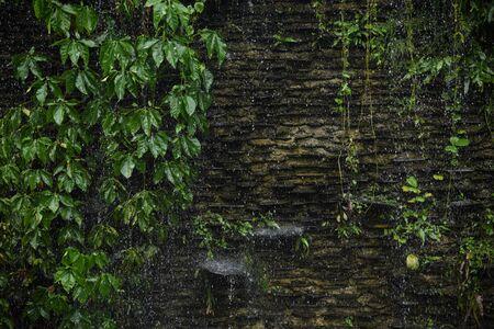 Heavy raining on green leaf