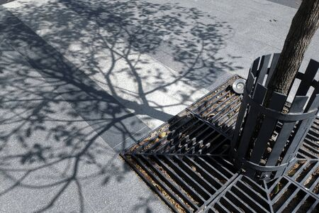 Very attractive shape of tree branch shadow on ground.
