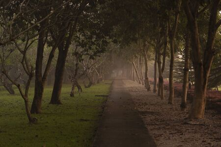 Empty walkway with big tree tunnel in morning with foggy theme