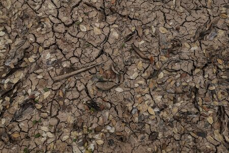 Dried river and cracked land texture with dried leaf and tree branch. Stock Photo