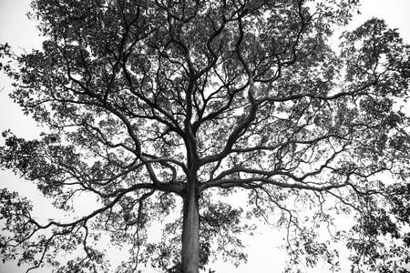 Giant tree branch in monotone mood against sky