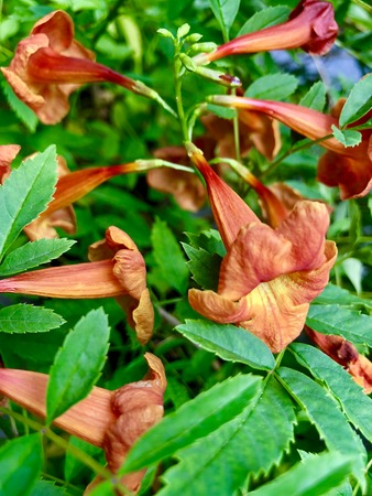 Red Gloom Flowers Imagens