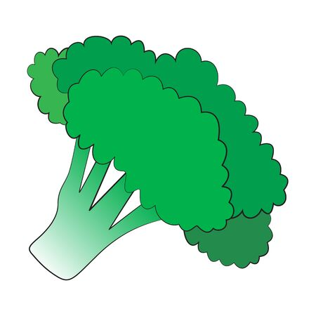 brocoli: Vector cartoon broccoli on white background.