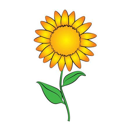 sun flower: Vector cartoon sun flower on white background.