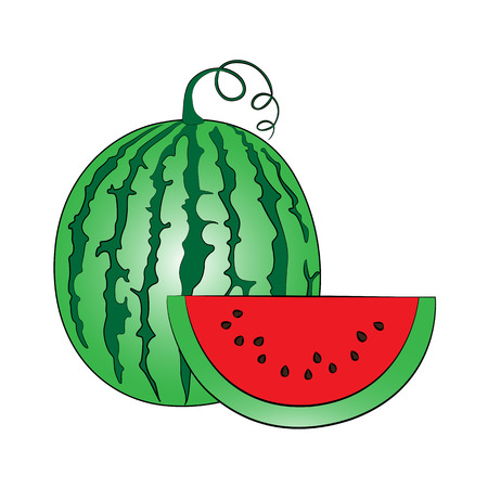 watermelon slice: Vector watermelon on white background. Illustration