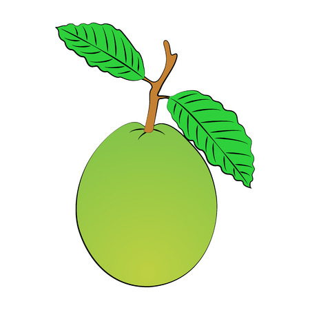 guava: Vector cartoon guava on white background. Illustration