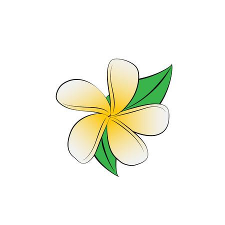 frangipani flower: Vector cartoon frangipani flower on white background.