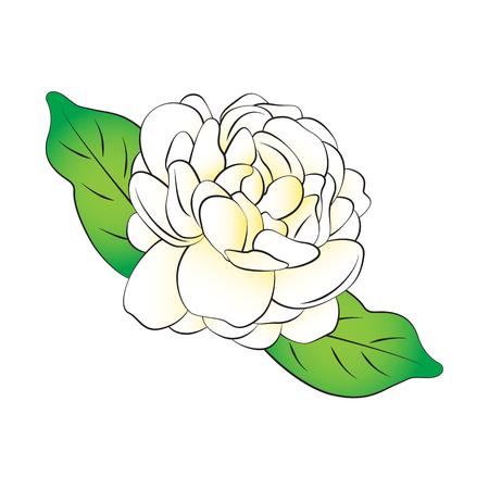 Vector de dibujos animados de jazmín sobre fondo blanco.