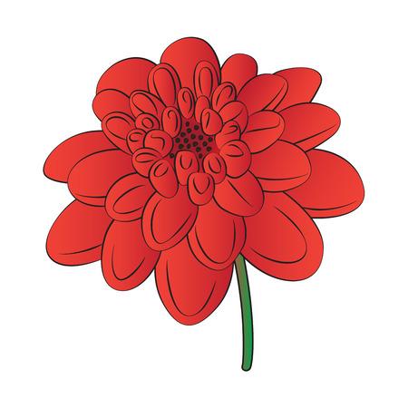 Vector cartoon dahlia on white background.