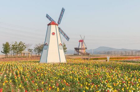 colorful tulips in the park and wooden windmills on background photo