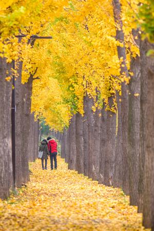 カラフルな木々 を配した公園の美しいロマンティックな路地。秋の自然な背景