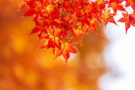 autumn background in seoul,South korea