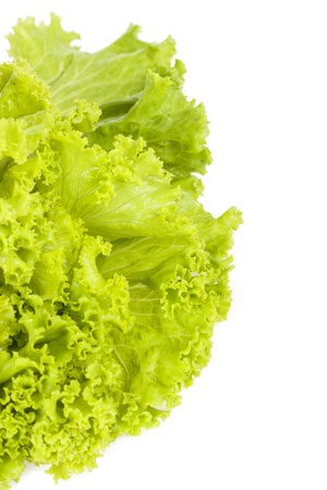 Lettuce on white background. Stock Photo
