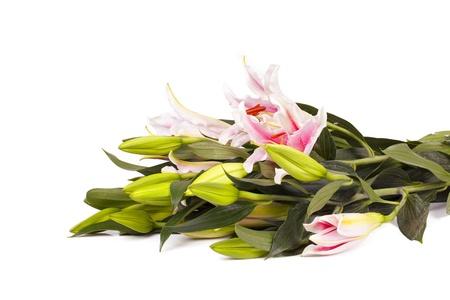 lirio blanco: Lily en un fondo blanco