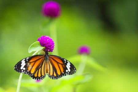 Butterfly in nature. photo