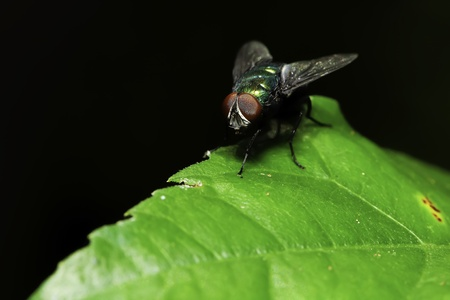 Fly on the leaf.