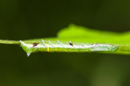 wiggler: Nature of the worm in Thailand