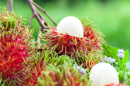 Rambutan is a crop of the country.