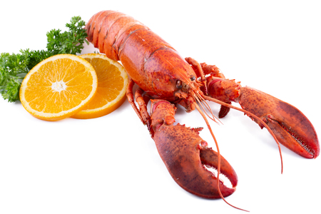 Lobster isolated on a white background.