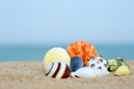 Seashells on a summer beach and sand as background.