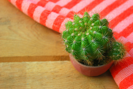 collocation: Cactus with sharp thorns in small pots lay on the wooden floor, decorated with soft orange stripes.