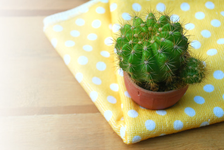 collocation: cute cactus in small pots lay on the blurred wooden floor, decorated with soft yellow dot fabric.