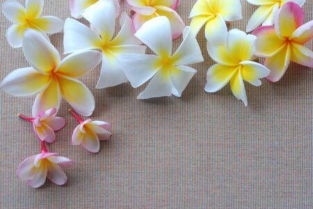 lineas verticales: Varios flor plumeria poner en tela marrón con unas pequeñas líneas verticales tienen un poco de espacio