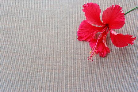 singly: Red hibiscus flower lay on brown cloth with a small vertical lines look simple and full of blank