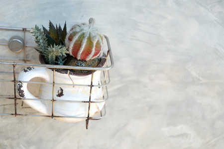 Various cactus in small pots have a white color and old in a aluminum basket hang on rough gray cement wall.