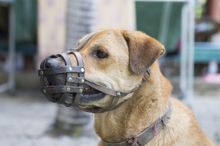 Dog wear muzzle. Selective Focus at the dog eye
