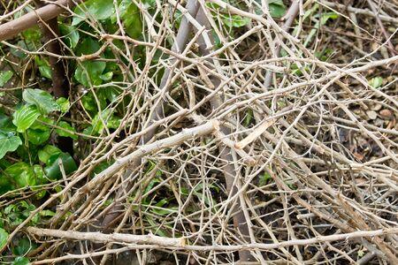 albero secco: Albero ramo secco
