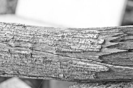 albero secco: Albero secco ramo in bianco e nero Archivio Fotografico