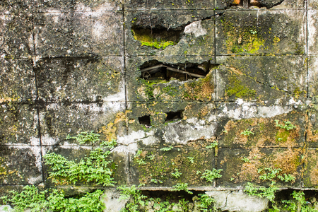 textured wall: Old brick wall background, Old brick wall overgrow with moss and plant Stock Photo