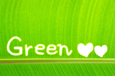 background green: Banana leaf write Green Stock Photo
