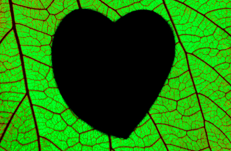 green  pattern: Green foliage draw heart shaped Stock Photo