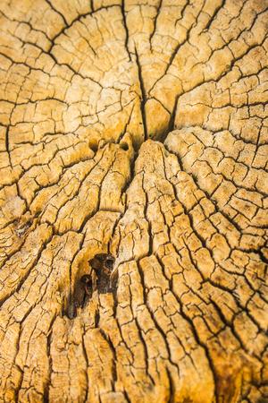 tree stump: Tree stump, wood background