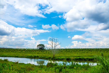nature scene of rural area in Chiangrai,Thailand photo
