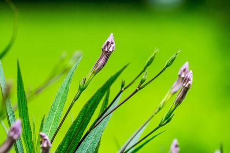 small purple flower: small purple flower,shallow focus