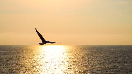 鳥は飛んで海夕日を 写真素材