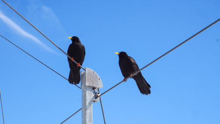 Two Black bird stands on cable wire with blue sky background Imagens - 78004584