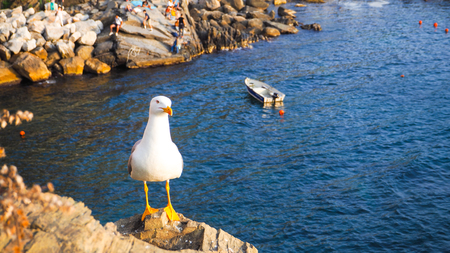 White Pigeon on the rock with blue sea background
