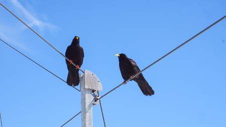Two black bird stand on cable wire with blue sky background Imagens - 78004590